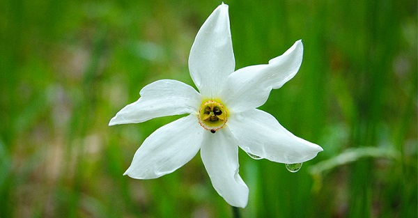 hoa thuy tien dep