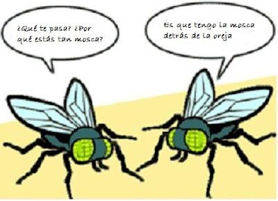 ¿Qué te pasa mosca?