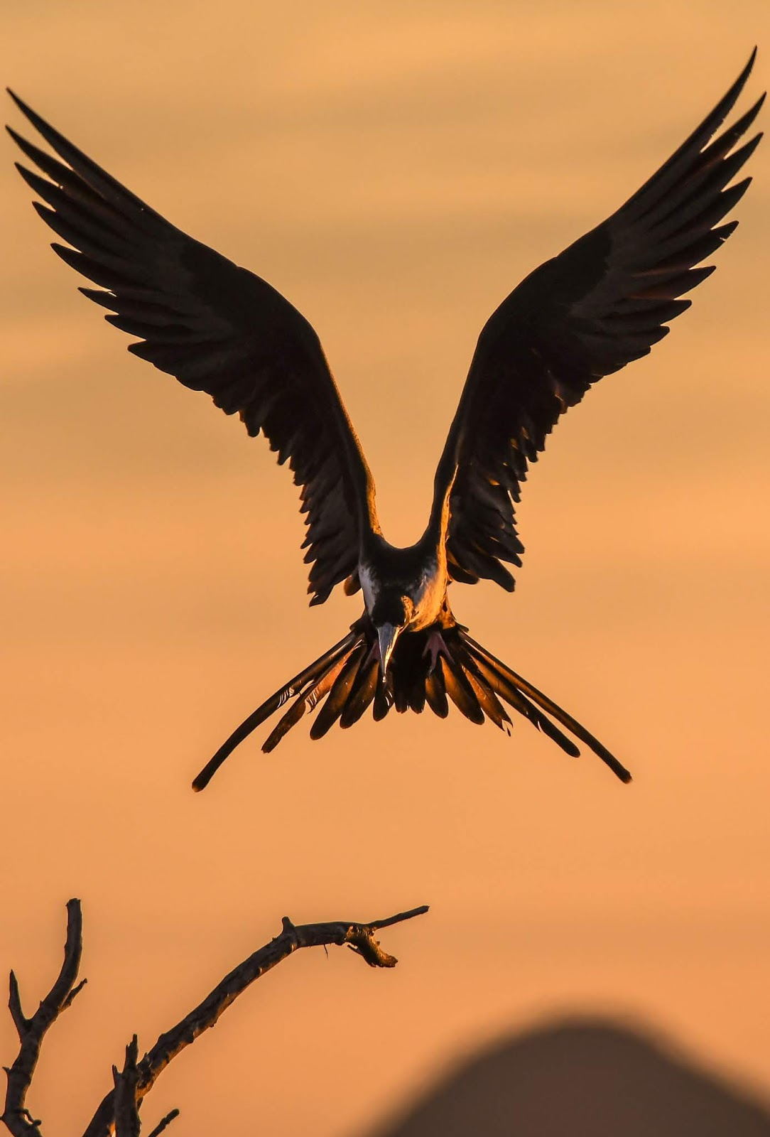 Amazing bird sunset landing photo.