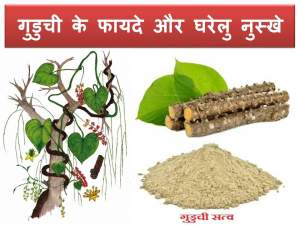 guduchi-uses-home-remedies-in-hindi