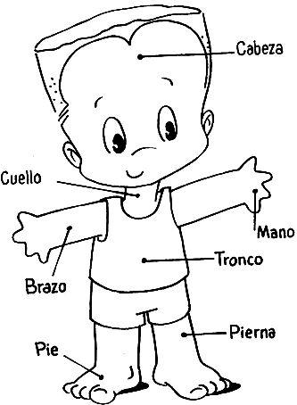 Dibujo de cuerpo humano en un niño indicando sus partes