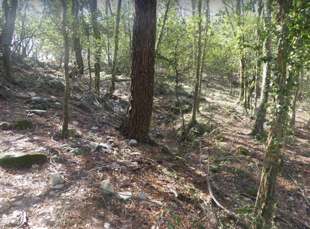 tratto di bosco lungo il sentiero 523