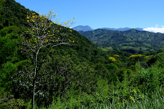 Flowering Trees in Puriscal