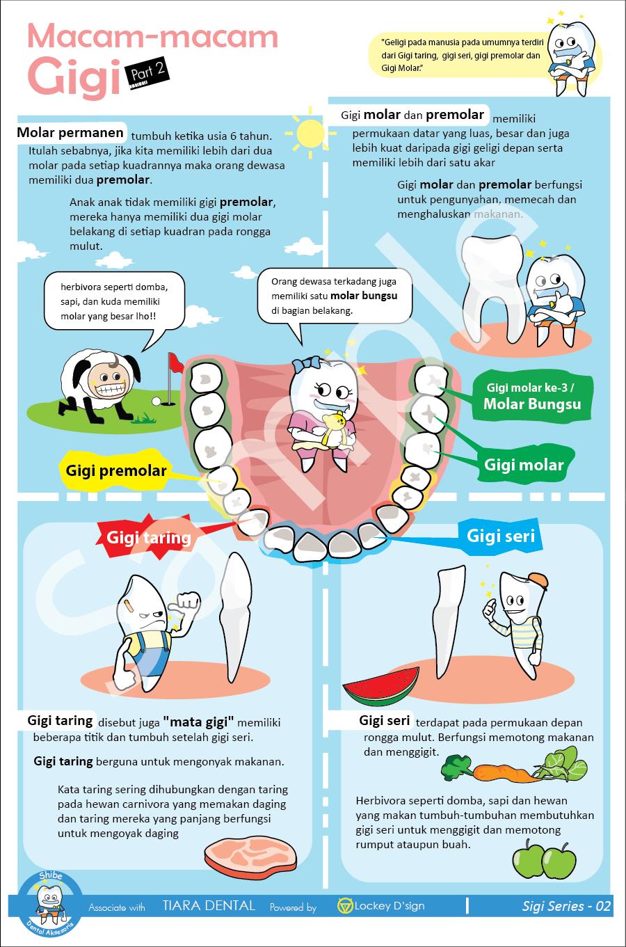Poster Macam  Macam Gigi  Poster Dental