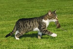 La crepa nel muro la medicina che fa ammalare gli animali for Cosa mangia il gatto