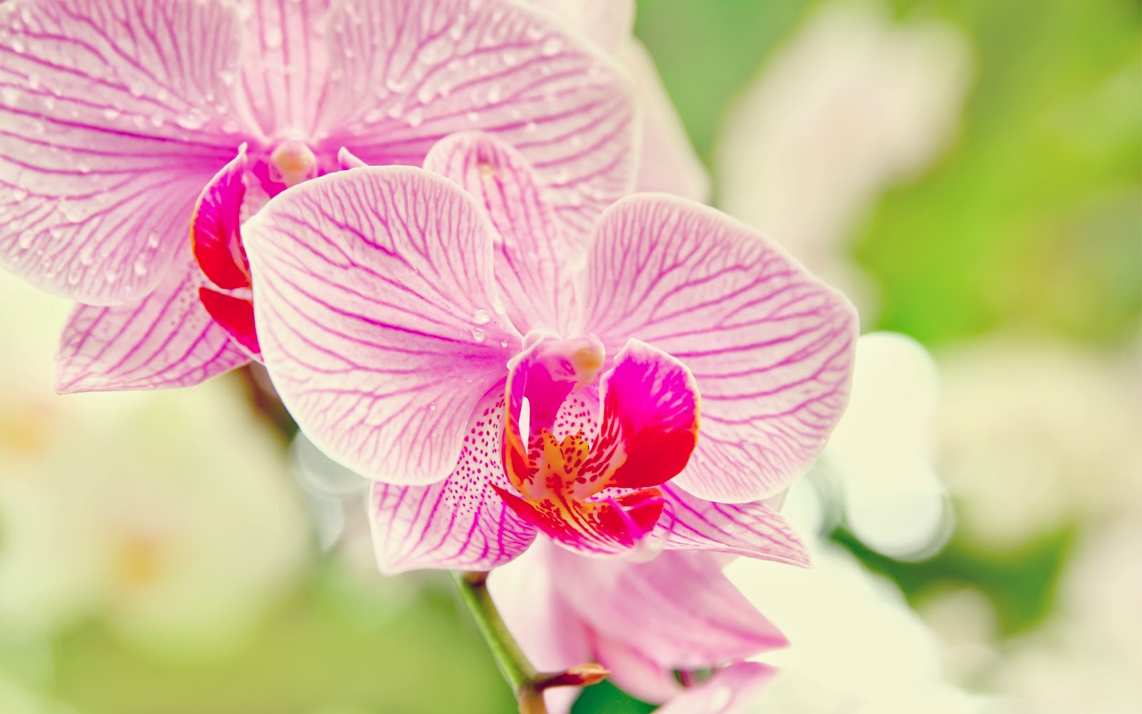 orchideen hd