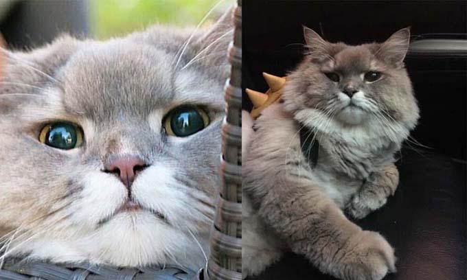 bone bone, cat, cute cat, funny cat, fat cat