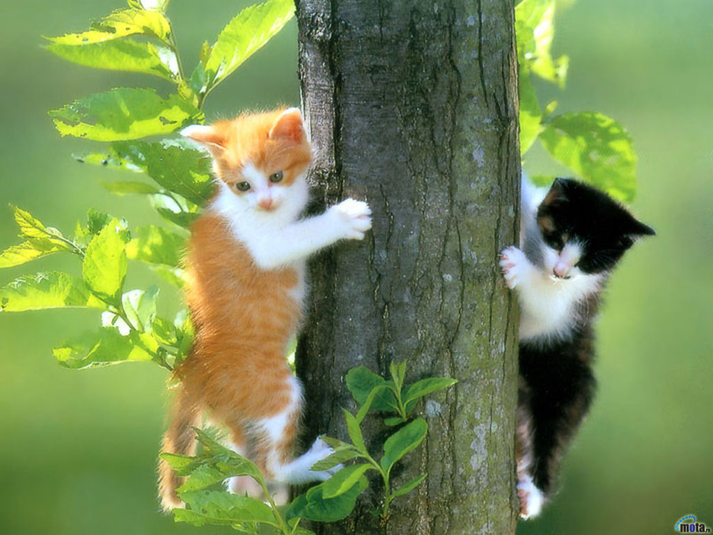 WALLPAPERS WORLD : Cats wallpapers