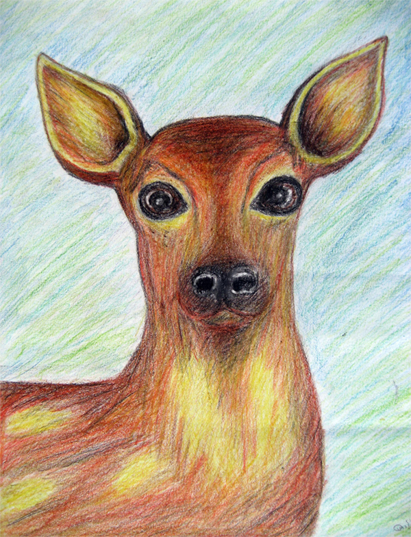 Color Pencil Drawing of Deer!