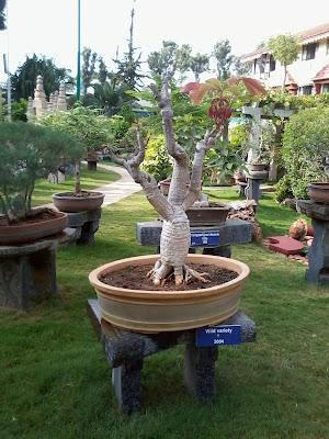 Sri Ganapati Sachchidananda Ashram Garden