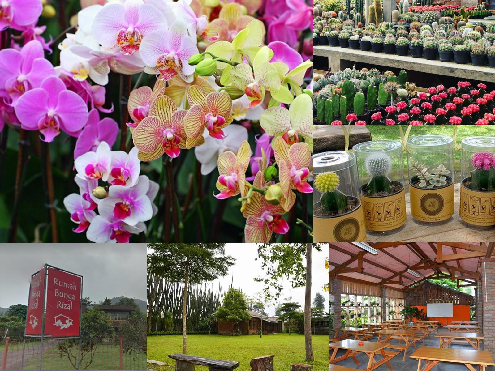 Anggrek dan Kaktus Rumah Rizal Maribaya Lembang