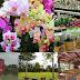 Wisata Rumah Bunga Rizal Maribaya Lembang
