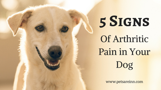 Signs of Arthritis Dogs