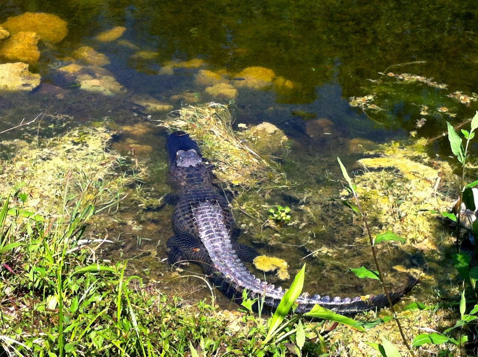 Everglades da naples a miami for Lago tartarughe