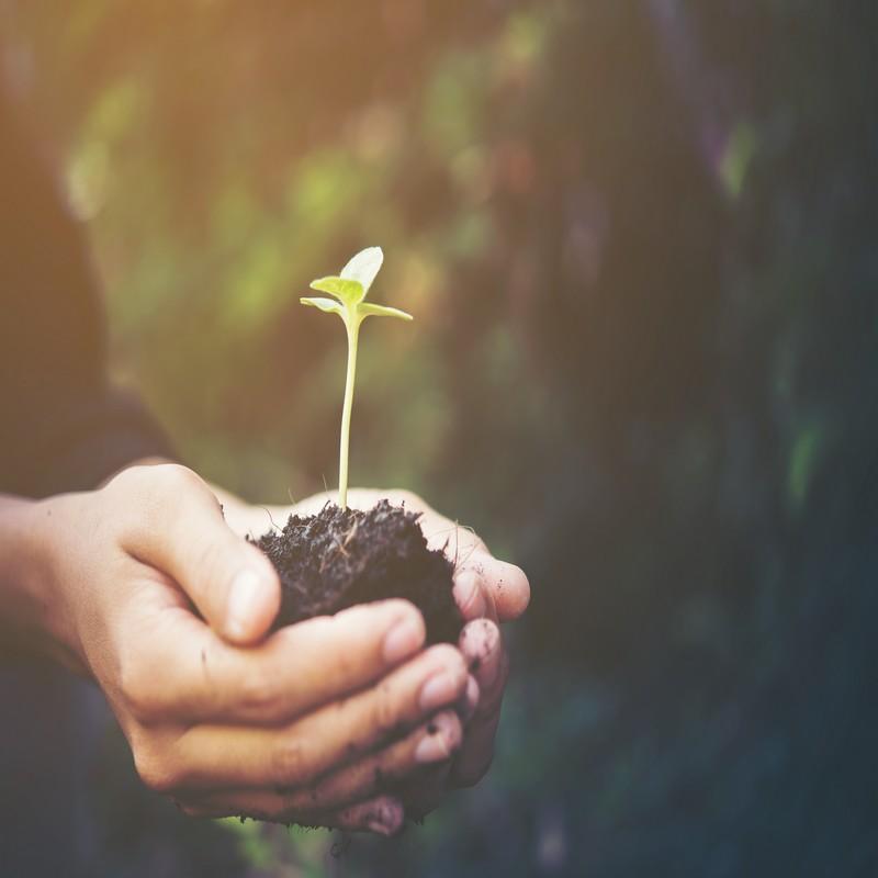 As sementes são opcionais, mas a colheita é obrigatória