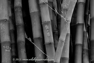Bamboo and Graffiti in the Botanical Gardens