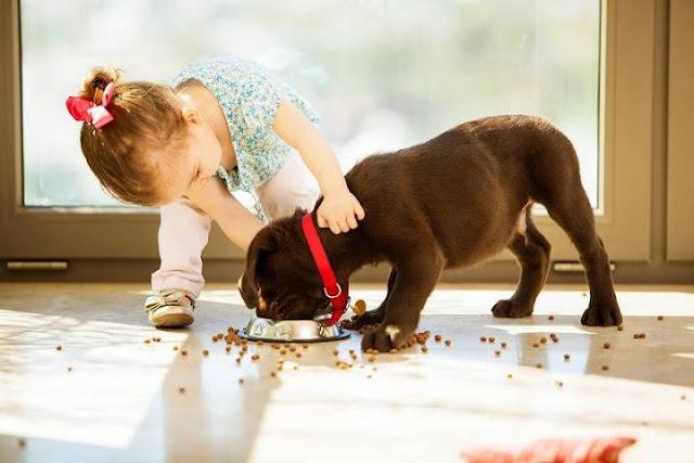 Cách lựa chọn thức ăn tốt nhất cho chó