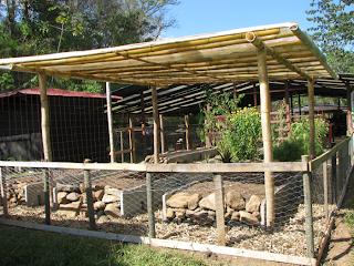 vegetable garden in Puriscal