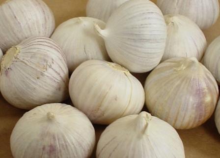 20 Khasiat Bawang Lanang (Bawang Putih Tunggal) Untuk Kesehatan