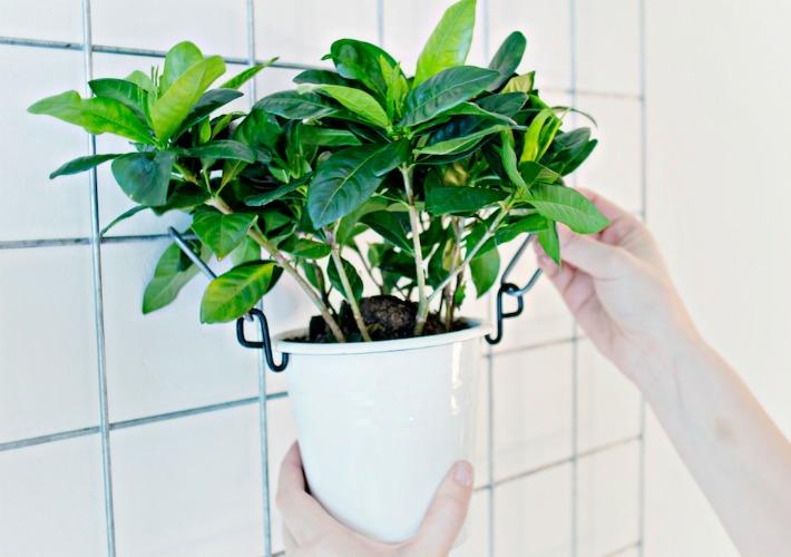 Diy jardin vertical para interior