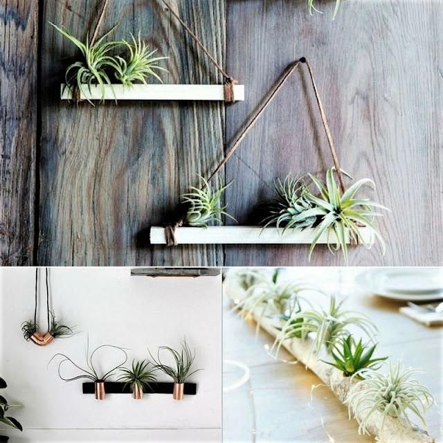 airplant, airplants, rośliny powietrzne