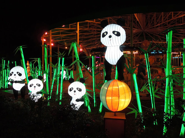 pandas in bamboo