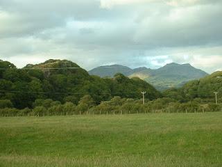 Woodland near Penrhyndeudraeth.