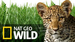 Nat Geo Wild Europe HD - Eutelsat Frequency
