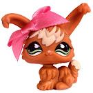 Littlest Pet Shop Gift Set Angora Rabbit (#774) Pet
