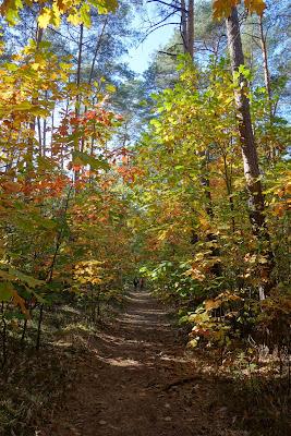 w kierunku Zaborowa Leśnego