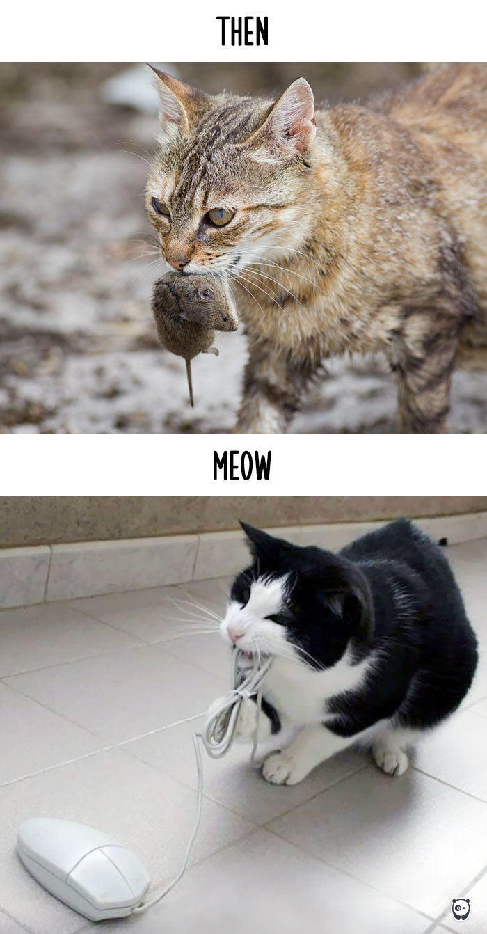 Then vs Meow How Technology Has Changed Cats' Lives (10+ Pics) - Hunting