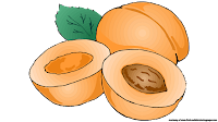 apricot clipart free