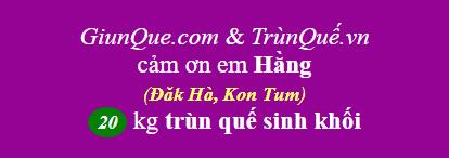 Trùn Quế Đăk Hà