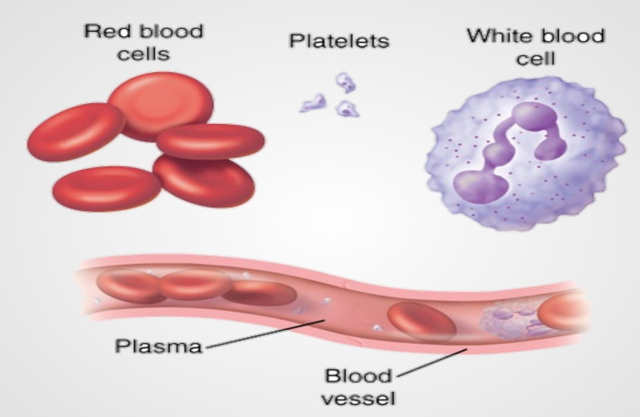 how to increase white blood cells home remedy