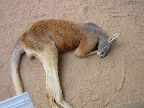 Animals' Own World: Animal Pic Dump