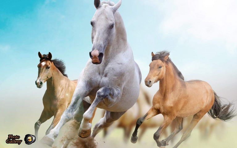 Photo gallery free premium wallpapers running horses hd wallpaper the horse has evolved over the past 45 to 55 million years from a small multi toed creature eohippus into the large single toed animal of today thecheapjerseys Choice Image