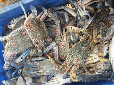 Crab Export from India