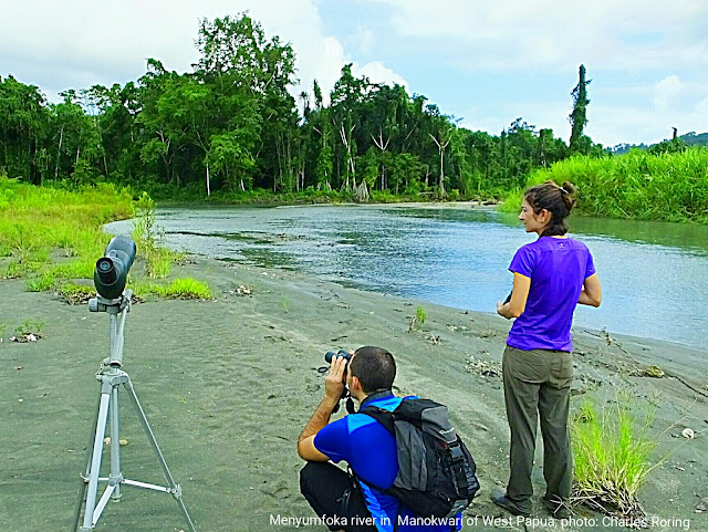 Birdwatching tour in tropical rainforest of West Papua