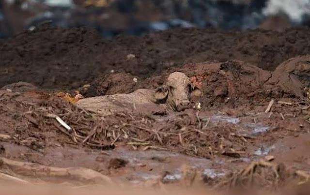 Vale é multada em R$ 100 mil por dia pelo Ibama por não salvar animais