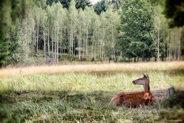 Parcul de animale de la Ivo - Harghita-blog FOTO=IDEEA