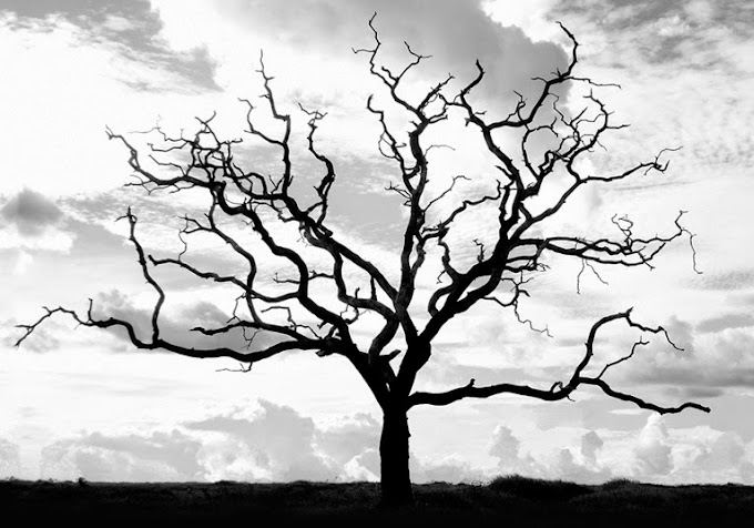 Kurumuş Ağaç