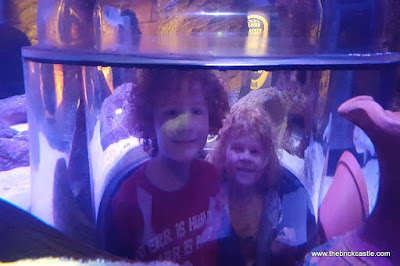 Hunting The Octopus at Sealife, Trafford Centre, Manchester