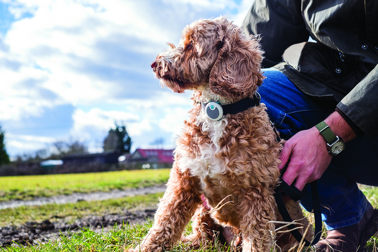 Oodle wears Sure Petcare's Animo dog behaviour and activity monitor during walk