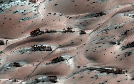 This is a crazy image showing trees on Mars.