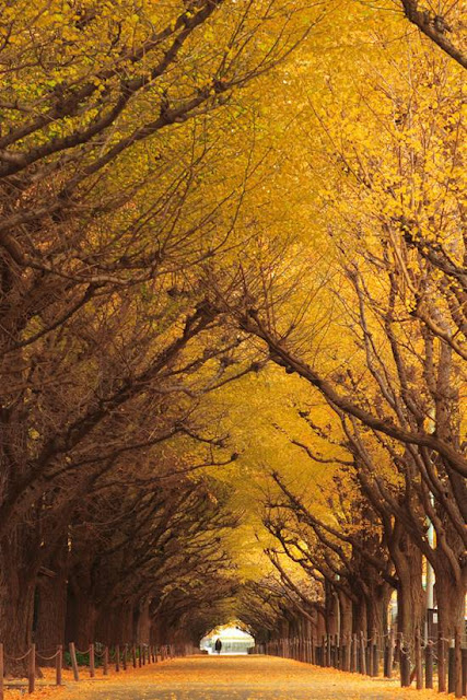 http://2.bp.blogspot.com/-LxZ98_fcaO8/ULnikiVh-II/AAAAAAAA6a0/G1PPSRvlx58/s1600/Top-10-Tree-Tunnel-004.jpg