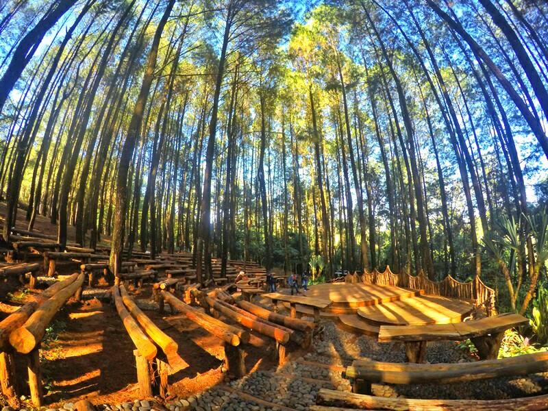 Hasil gambar untuk hutan pinus mangunan