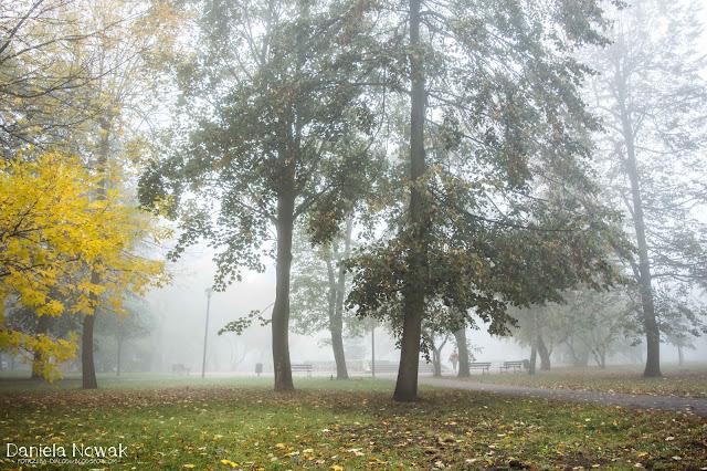 Park w Pyskowicach