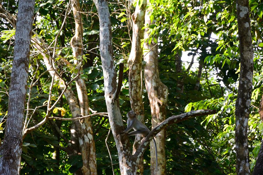 trekking w tajlandii