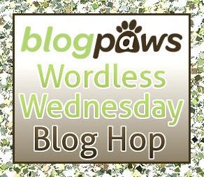 BlogPaws Wordless Wednesday