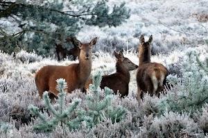 11 sự kiện tuần lộc chia sẻ mùa đông này